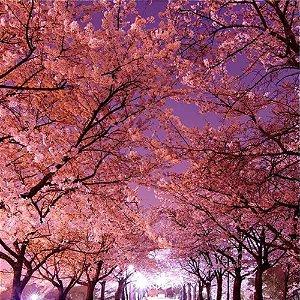 602 - Essência Flor de Cerejeira 100ml