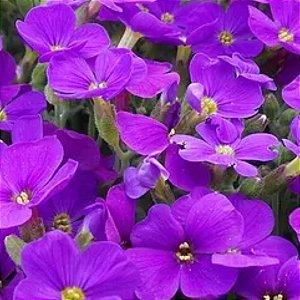 5094 - Essência Violeta 100ml