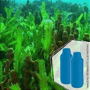 342 - Essência Desinfetante Algas Marinhas 1/100