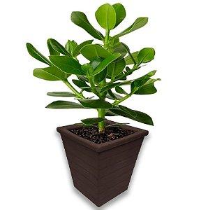 Vaso Planta Polietileno Jardim Varanda Quadrado Cd03