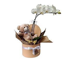 Orquídea Com Pelúcia