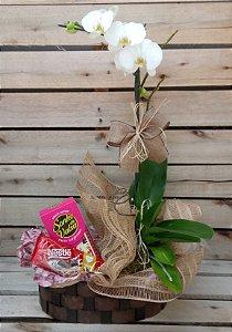 Phalaenopsis com bombons