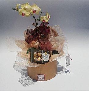 Orquídea Cavalaria Rusticana