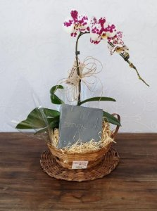 Orquídea com Sabonete Natura