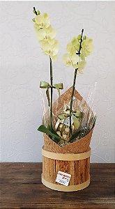 Orquídea com Ferrero