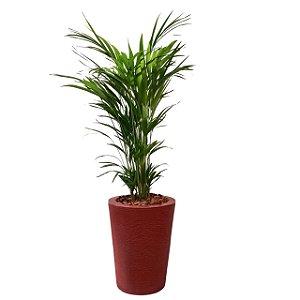 Palmeira no Vaso de Fibra