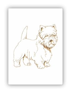 Westie Highland White Terrier 2