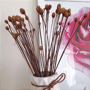 Cabeça de Nego - Flor Seca