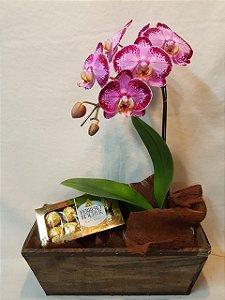 Orquídea Pink no Cachepot de Madeira com Caixa de Bombom Ferrero Rocher 8 unidades