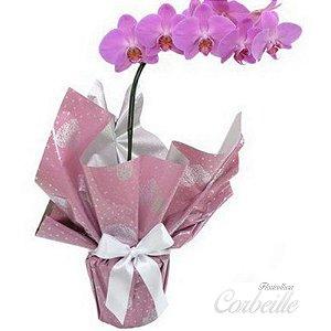 Orquídea pink Phalaenopsis