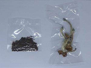 Psilohuasca (3 gramas de Psilocybe cubensis TKSSS + 3 gramas de Arruda síria)