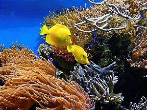 Painel de Festa em Tecido Sublimado 3d Fundo do Mar Coral e Peixes