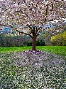 Fundo Fotográfico em Tecido Sublimado Flores Desabrochando