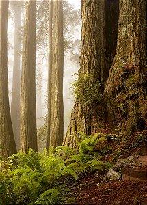 Fundo Fotográfico em Tecido Sublimado Névoa na Floresta