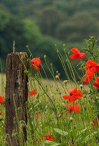 Fundo Fotográfico em Tecido Sublimado Cerca e Flores