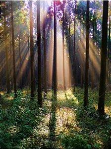 Fundo Fotográfico em Tecido Sublimado Sol na Floresta
