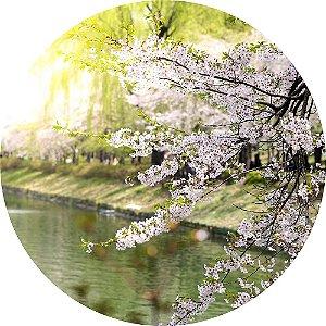Painel de Festa Redondo em Tecido Sublimado Flores de Cerejeira c/elástico
