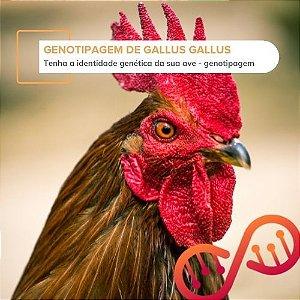 Registro Genético Galus galus, Genotipagem