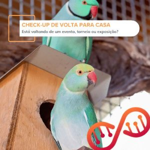 Check-up de Volta para Casa