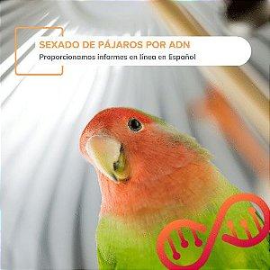 Sexado de Pájaros por ADN (Informe en Español)