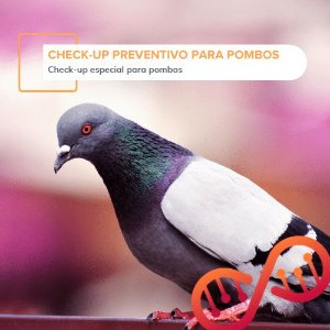 Check-up Preventivo para Pombos