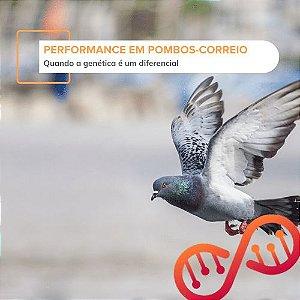 Performance em Pombos-Correio (genes LDHA, DRD4-1, e DRD4-2)
