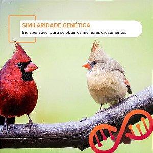 Similaridade Genética para Aves