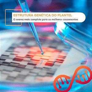 Estrutura Genética do Plantel
