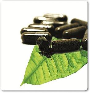 Pholia negra - Ilex paragrasiensis 200mg 60 cápsulas