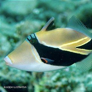 Retângulo Triggerfish
