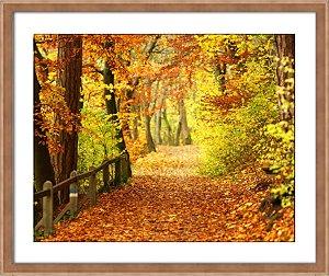 Quadro Caminhos de Outono II