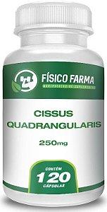 Cissus Quadrangularis 250mg - 120 Cápsulas