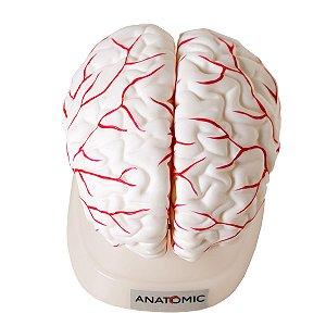Cérebro 8 Partes Em Corte Semi Emborrachada Em Resina Anatomic