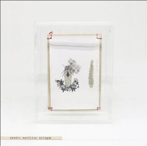 Quadro Acrílico Colagem P - Cicada