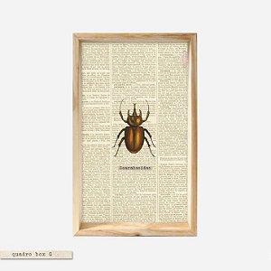 QUADRO BOX - Escaravelho