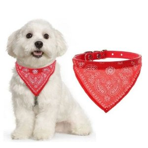 Coleira  Pet Shop Bandana  M