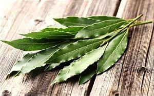 Eucalipto Folhas Desidratadas  - BELEZA DA TERRA