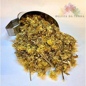 Macela Flores Mista - BELEZA DA TERRA