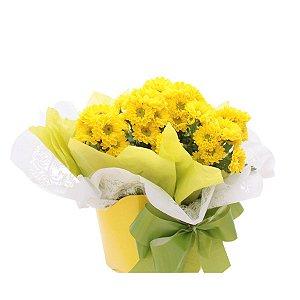 Crisântemo em Vaso Amarelo Pote 11 Decoração Kit com 8 unidades 11 cm