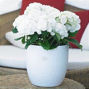 Vaso Importado Boston Branco-Tamanho Orquídea Pote 15