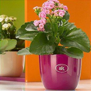 Vaso Importado Rosa Escuro-Tamanho Violeta