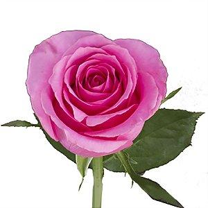 Rosas Pink - 01 Pacote com 20 unidades - Escolha o tamanho abaixo: