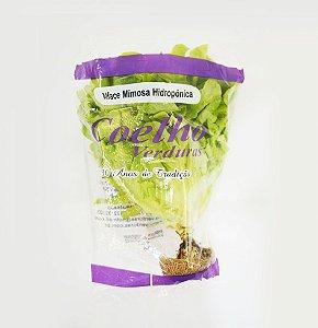 Alface Mimosa - 1 unidade