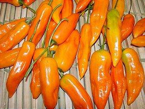 Sementes de Pimenta Aji Amarela: 20 Sementes