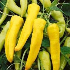 Sementes de Pimenta Amarela Comprida: 40 Sementes