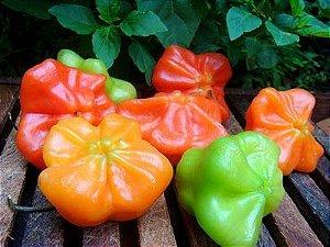 Sementes de Pimenta Cambuci: 40 Sementes