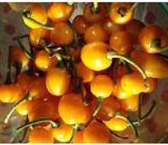 Sementes de Pimenta Luna: 40 Sementes
