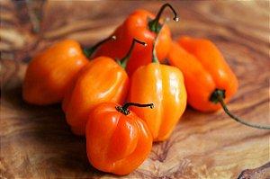 Sementes de Pimenta Orange Habanero: 20 Sementes