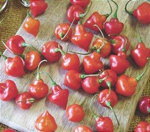 Sementes de Pimenta Piãozinho: 20 Sementes