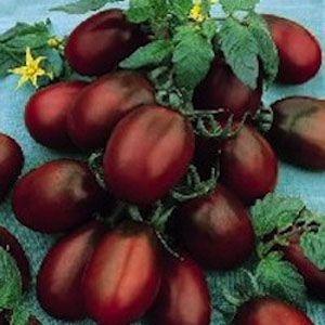 Sementes de Tomate Black Plum: 20 Sementes